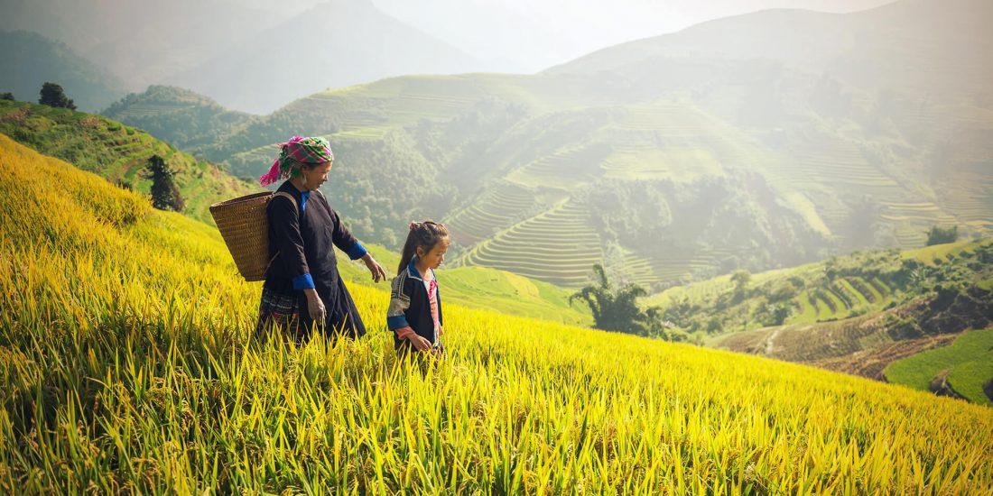 Campo verde China Autentica adopción