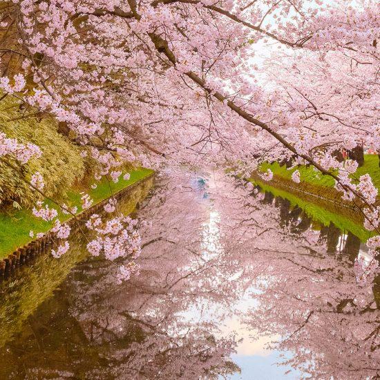 china primavera parque flores colorful