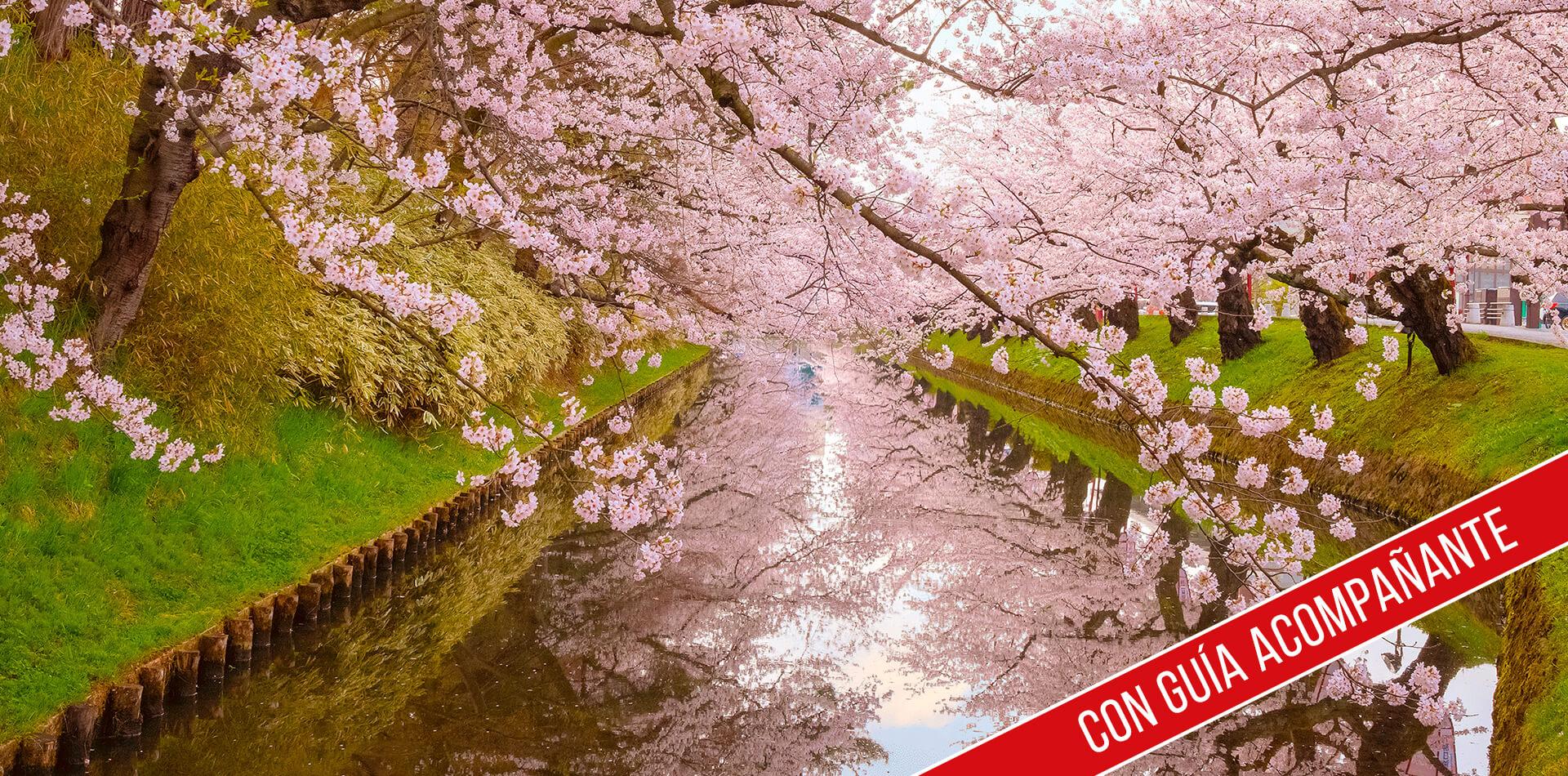 china autentica: primavera en china 2020 con guia acompañante